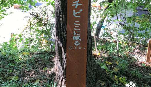 チビちゃんのお墓参り@中棚荘