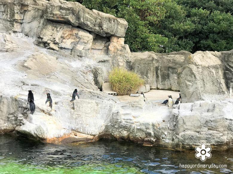 葛西水族園 ペンギン