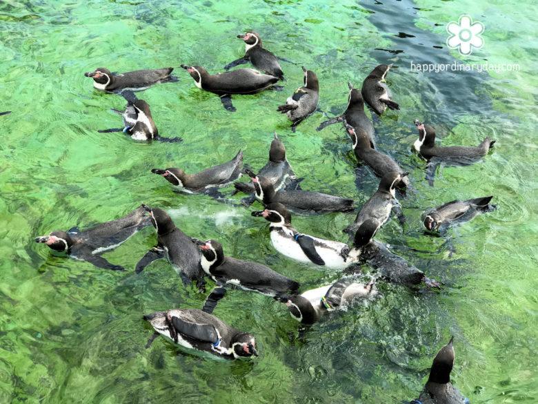 葛西臨海水族園 フンボルトペンギン2