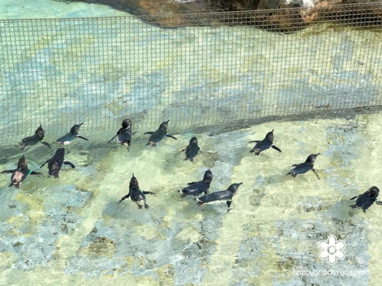 葛西臨海水族園 フェアリーペンギン