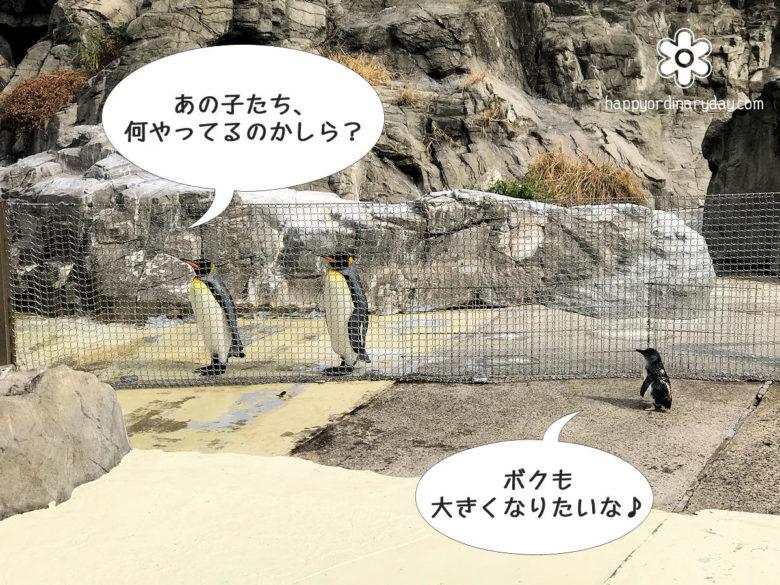葛西臨海水族園 オウサマペンギン&フェアリーペンギン