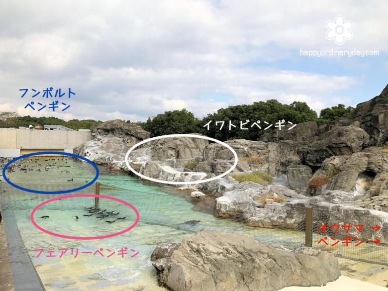 葛西臨海水族園 ペンギン位置関係